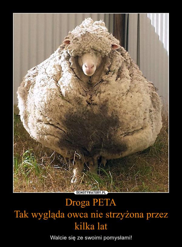 Droga PETATak wygląda owca nie strzyżona przez kilka lat – Walcie się ze swoimi pomysłami!