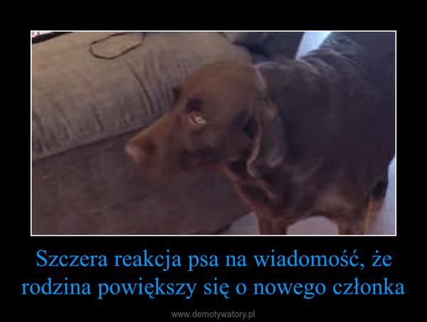 Szczera reakcja psa na wiadomość, że rodzina powiększy się o nowego członka –