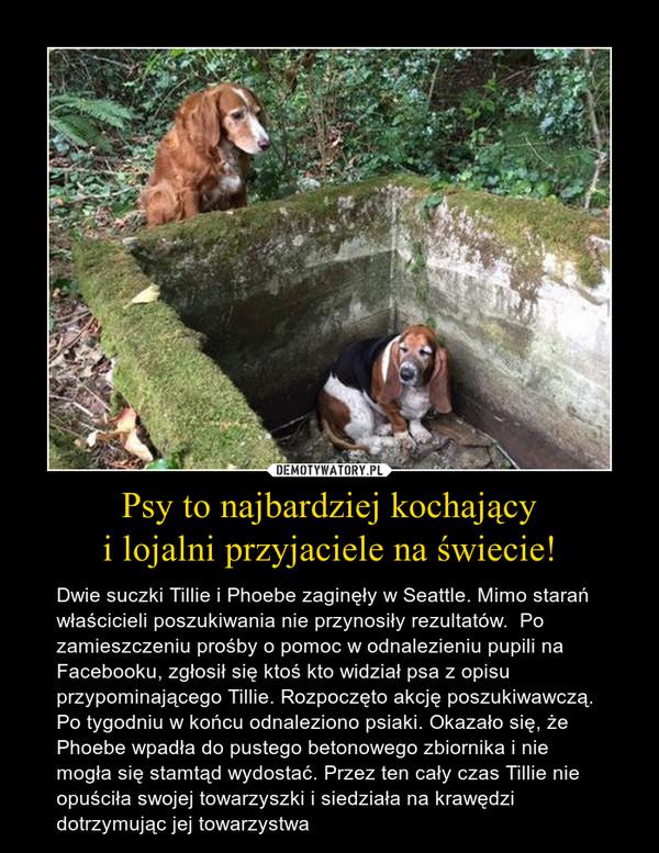 Psy to najbardziej kochającyi lojalni przyjaciele na świecie! – Dwie suczki Tillie i Phoebe zaginęły w Seattle. Mimo starań właścicieli poszukiwania nie przynosiły rezultatów.  Po zamieszczeniu prośby o pomoc w odnalezieniu pupili na Facebooku, zgłosił się ktoś kto widział psa z opisu przypominającego Tillie. Rozpoczęto akcję poszukiwawczą. Po tygodniu w końcu odnaleziono psiaki. Okazało się, że Phoebe wpadła do pustego betonowego zbiornika i nie mogła się stamtąd wydostać. Przez ten cały czas Tillie nie opuściła swojej towarzyszki i siedziała na krawędzi dotrzymując jej towarzystwa
