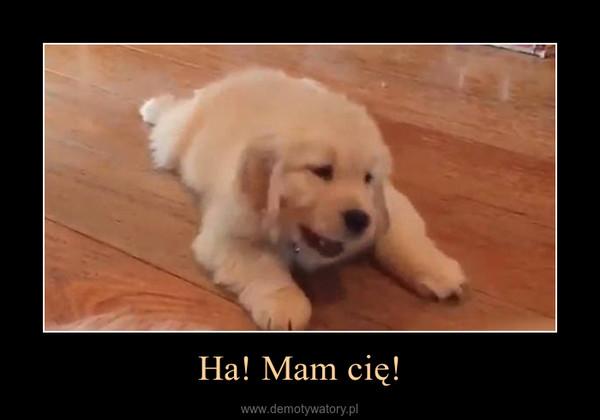 Ha! Mam cię! –