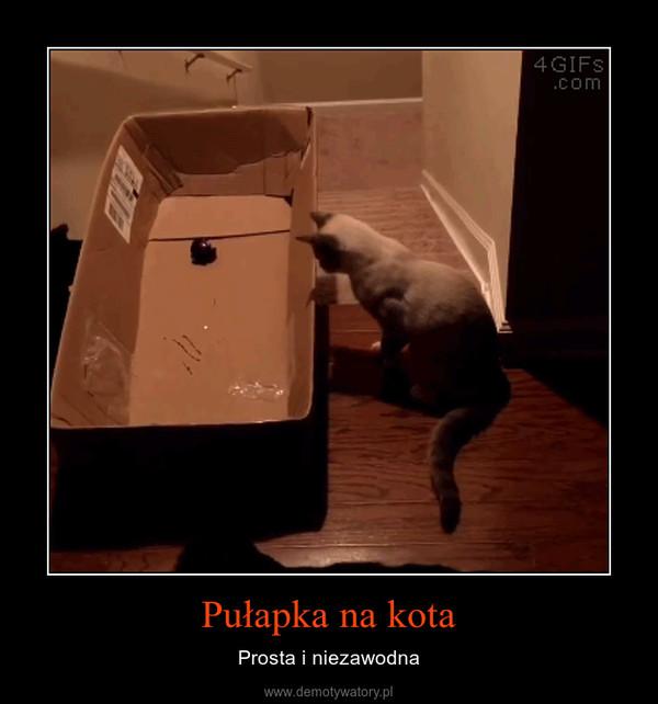 Pułapka na kota – Prosta i niezawodna