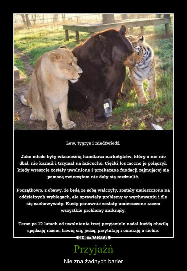 Przyjaźń – Nie zna żadnych barier Lew, tygrys i niedźwiedź. Jako młode były własnością handlarza narkotyków, który o nie nie dbał, nie karmił i trzymał na łańcuchu. Ciężki los mocno je połączył, kiedy wreszcie zostały uwolnione i przekazane fundacji zajmującej się pomocą zwierzętom nie dały się rozdzielić. Początkowo, z obawy, że będą ze sobą walczyły, zostały umieszczone na oddzielnych wybiegach, ale sprawiały problemy w wychowaniu i źle się zachowywały. Kiedy ponownie zostały umieszczone razem wszystkie problemy zniknęły. Teraz po 12 latach od uwolnienia trzej przyjaciele nadal każdą chwilę spędzają razem, bawią się, jedzą, przytulają i ocierają o siebie.
