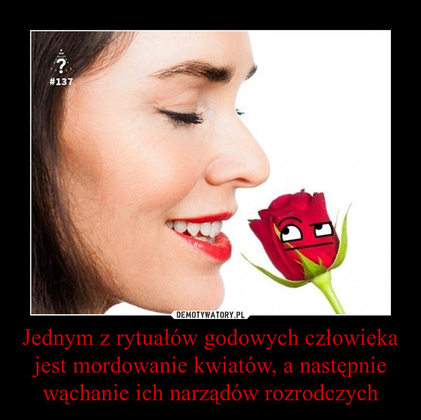 Jednym z rytuałów godowych człowieka jest mordowanie kwiatów, a następnie wąchanie ich narządów rozrodczych –