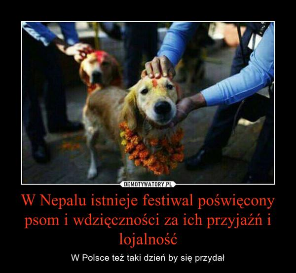 W Nepalu istnieje festiwal poświęcony psom i wdzięczności za ich przyjaźń i lojalność – W Polsce też taki dzień by się przydał