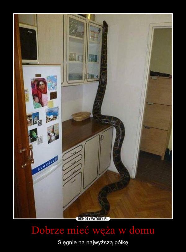Dobrze mieć węża w domu – Sięgnie na najwyższą półkę