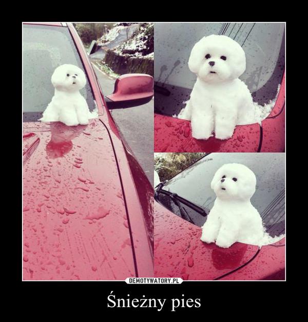 Śnieżny pies –