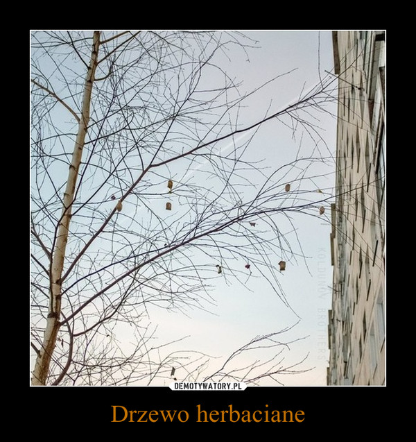 Drzewo herbaciane –