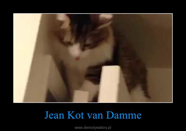 Jean Kot Van Damme Demotywatorypl