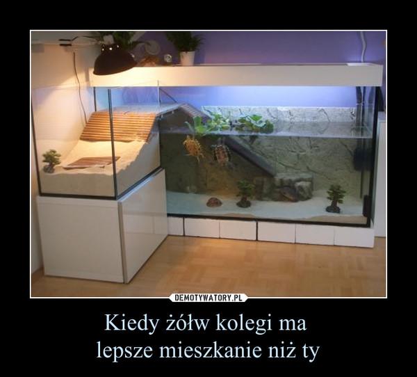 Kiedy żółw kolegi ma lepsze mieszkanie niż ty –