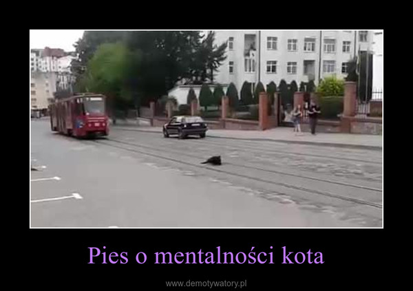 Pies o mentalności kota –