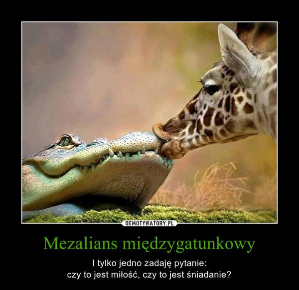 Mezalians międzygatunkowy – I tylko jedno zadaję pytanie:czy to jest miłość, czy to jest śniadanie?