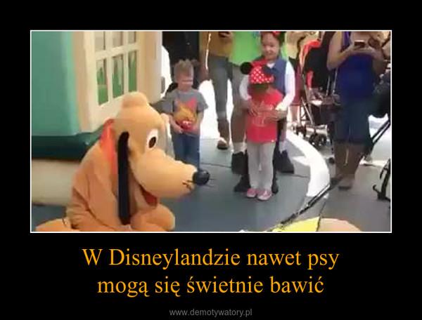 W Disneylandzie nawet psymogą się świetnie bawić –