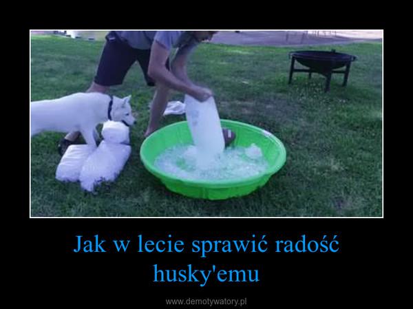Jak w lecie sprawić radość husky'emu –
