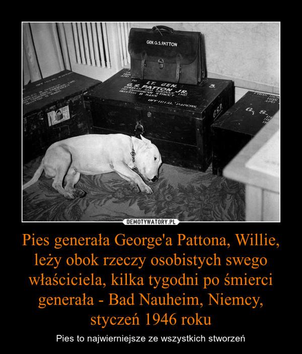 Pies generała George'a Pattona, Willie, leży obok rzeczy osobistych swego właściciela, kilka tygodni po śmierci generała - Bad Nauheim, Niemcy, styczeń 1946 roku – Pies to najwierniejsze ze wszystkich stworzeń