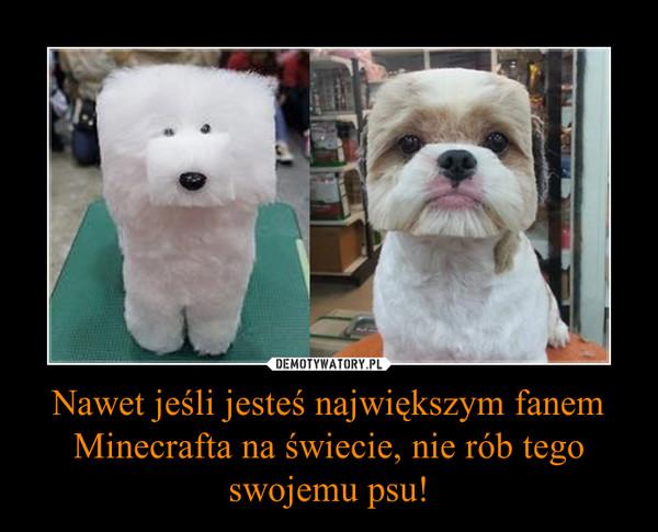 Nawet jeśli jesteś największym fanem Minecrafta na świecie, nie rób tego swojemu psu! –