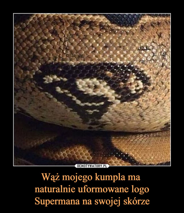 Wąż mojego kumpla ma naturalnie uformowane logoSupermana na swojej skórze –