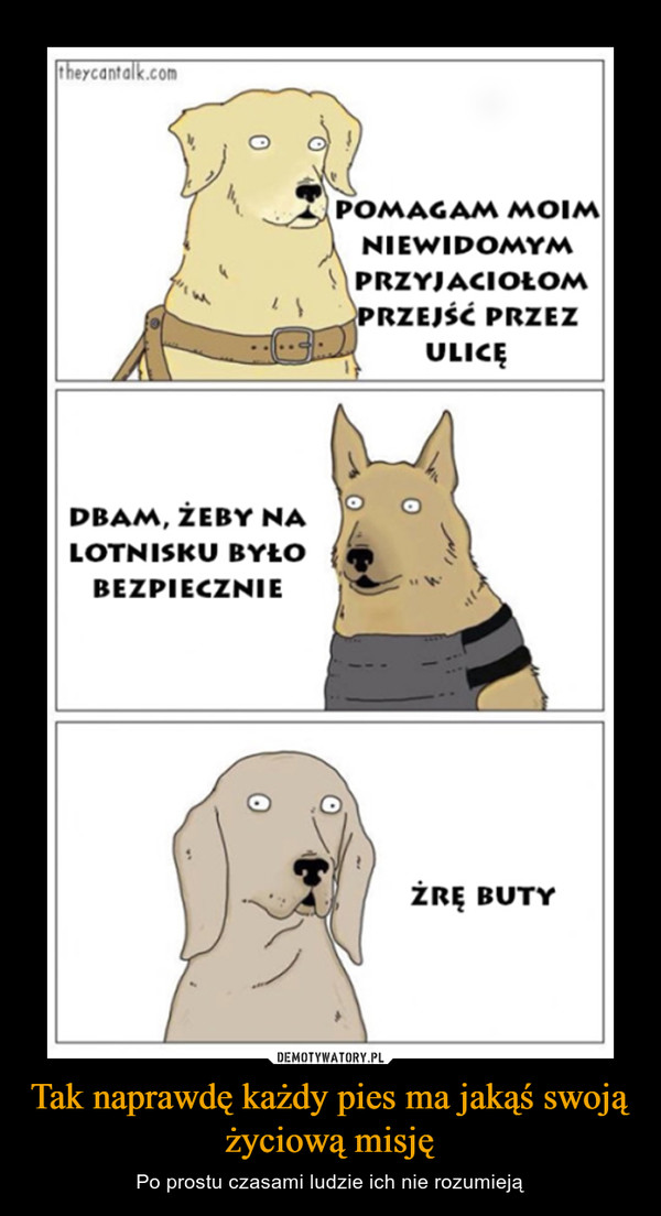Tak naprawdę każdy pies ma jakąś swoją życiową misję – Po prostu czasami ludzie ich nie rozumieją