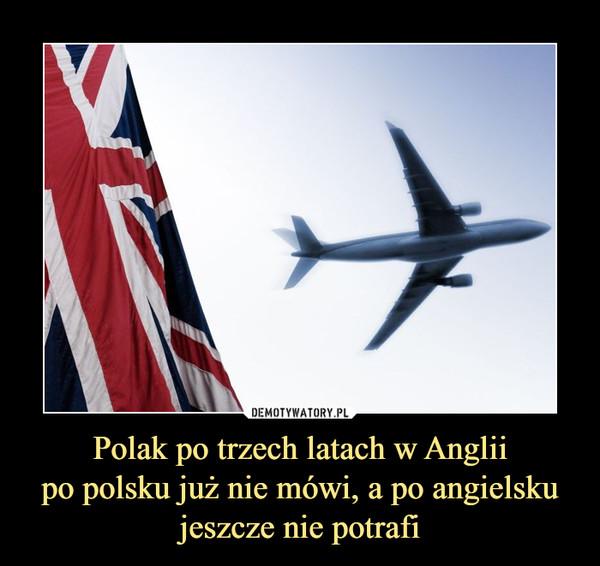 Polak po trzech latach w Angliipo polsku już nie mówi, a po angielsku jeszcze nie potrafi –