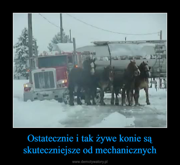Ostatecznie i tak żywe konie są skuteczniejsze od mechanicznych –