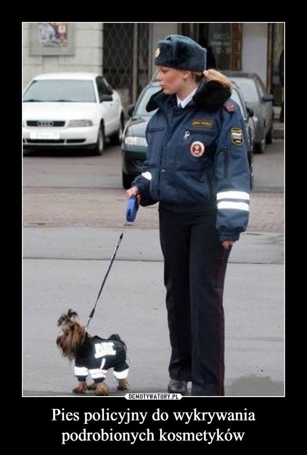 Pies policyjny do wykrywania podrobionych kosmetyków –