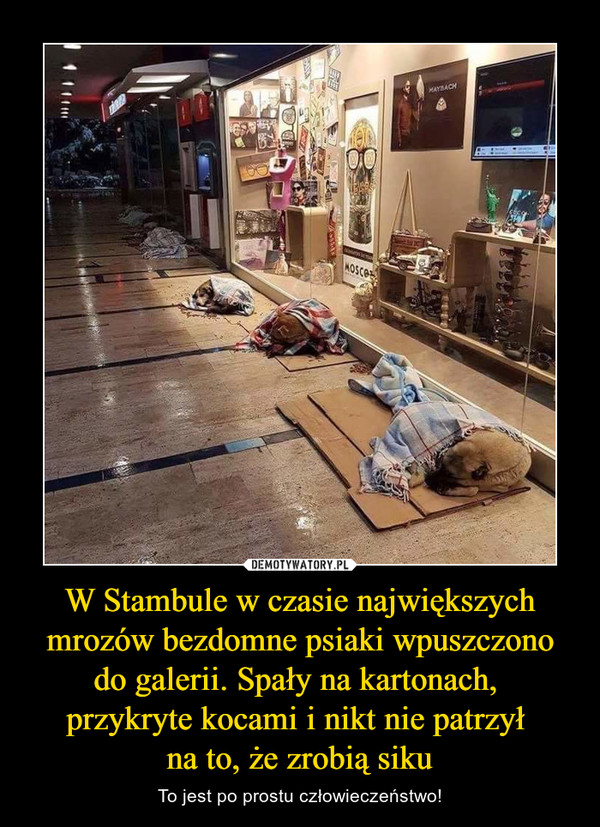W Stambule w czasie największych mrozów bezdomne psiaki wpuszczono do galerii. Spały na kartonach, przykryte kocami i nikt nie patrzył na to, że zrobią siku – To jest po prostu człowieczeństwo!