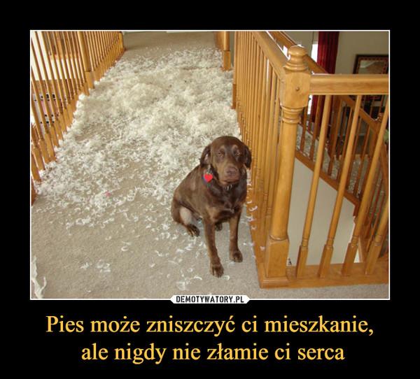 Pies może zniszczyć ci mieszkanie, ale nigdy nie złamie ci serca –