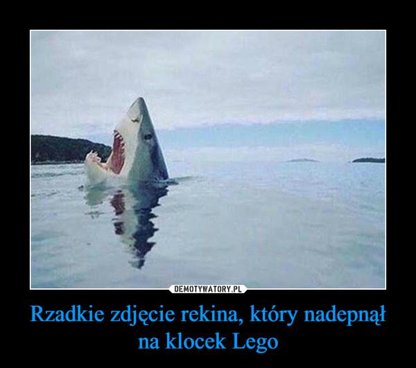Rzadkie zdjęcie rekina, który nadepnął na klocek Lego –