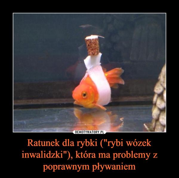 """Ratunek dla rybki (""""rybi wózek inwalidzki""""), która ma problemy z poprawnym pływaniem –"""