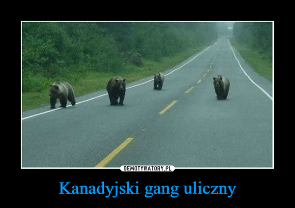 Kanadyjski gang uliczny –