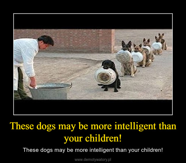These dogs may be more intelligent than your children! – These dogs may be more intelligent than your children!