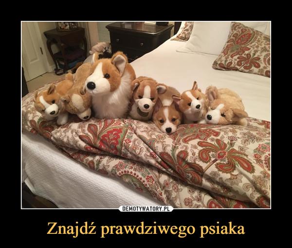 Znajdź prawdziwego psiaka –