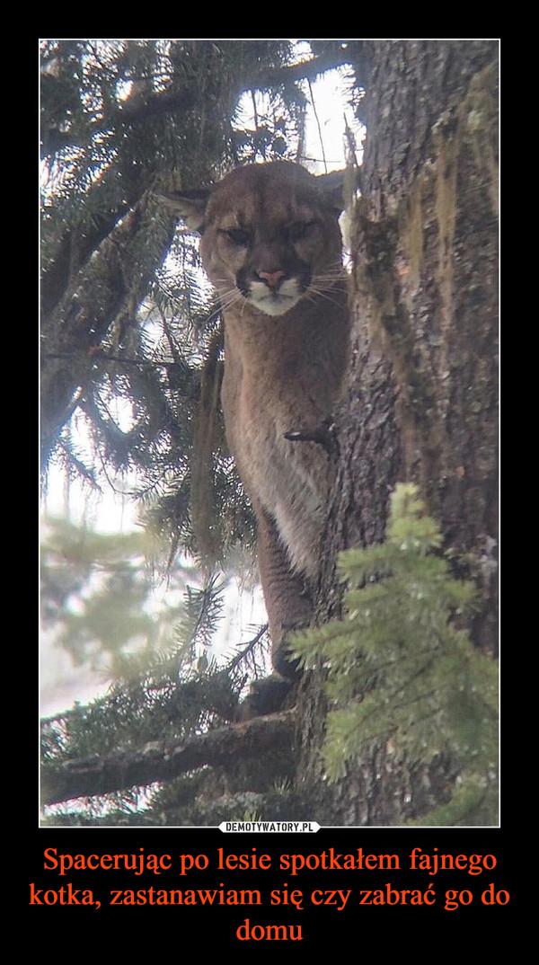 Spacerując po lesie spotkałem fajnego kotka, zastanawiam się czy zabrać go do domu –