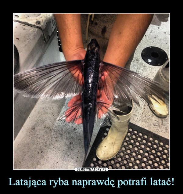 Latająca ryba naprawdę potrafi latać! –