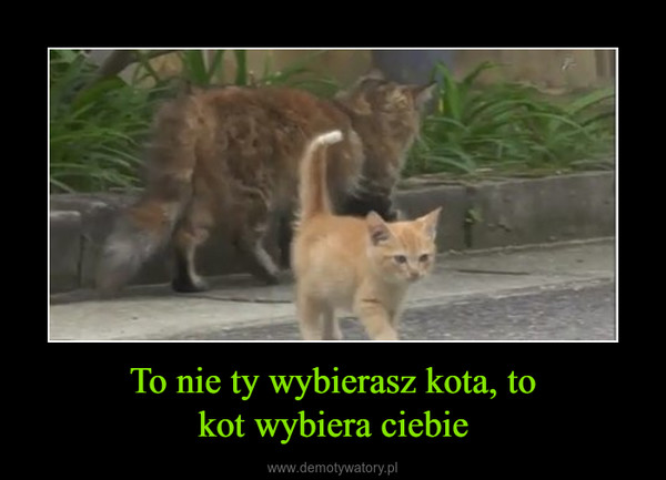 To nie ty wybierasz kota, tokot wybiera ciebie –