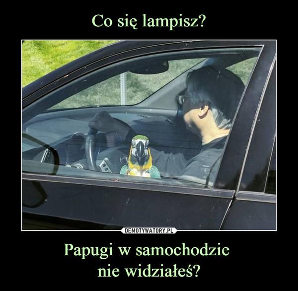 Papugi w samochodzie nie widziałeś? –