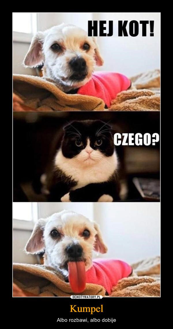 Kumpel – Albo rozbawi, albo dobije Hej kot!czego?
