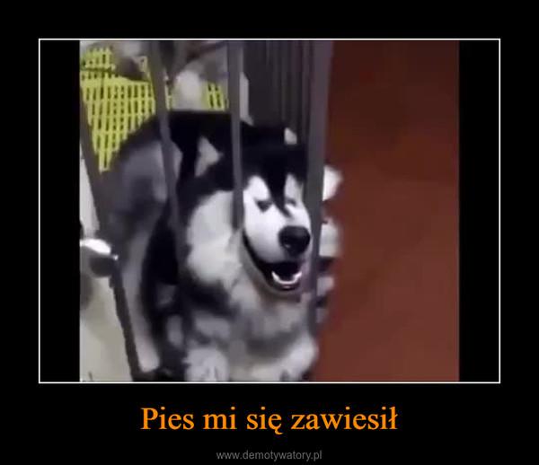 Pies mi się zawiesił –