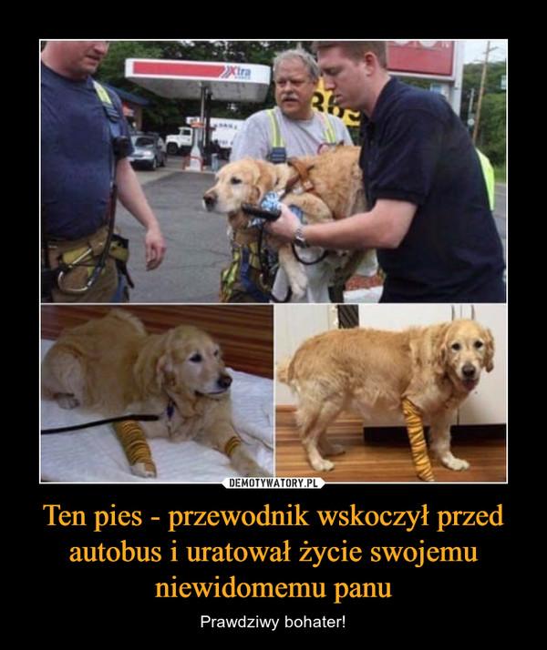 Ten pies - przewodnik wskoczył przed autobus i uratował życie swojemu niewidomemu panu – Prawdziwy bohater!