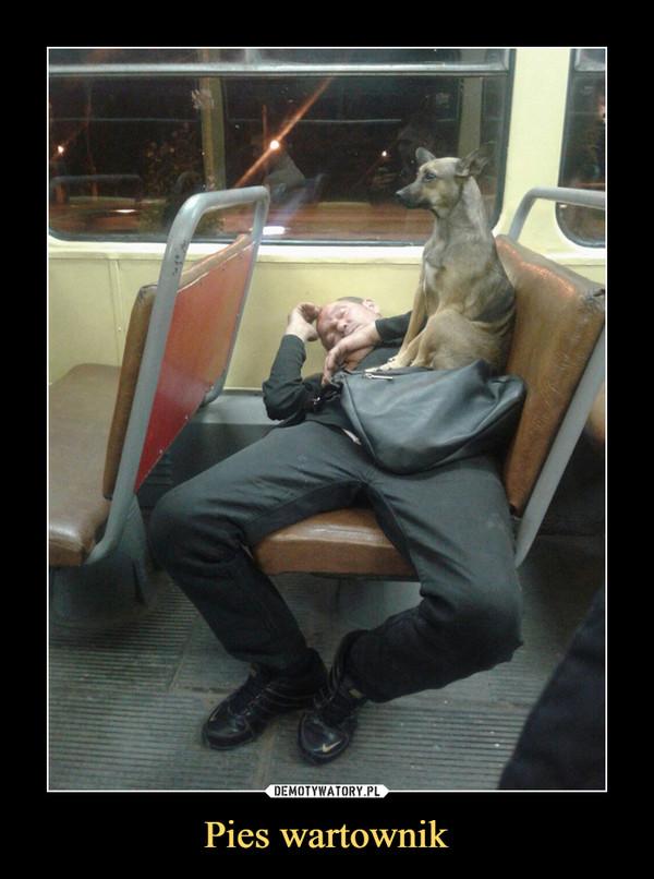 Pies wartownik –