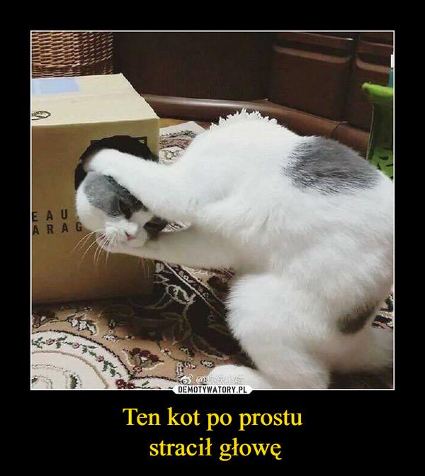 Ten kot po prostu stracił głowę –