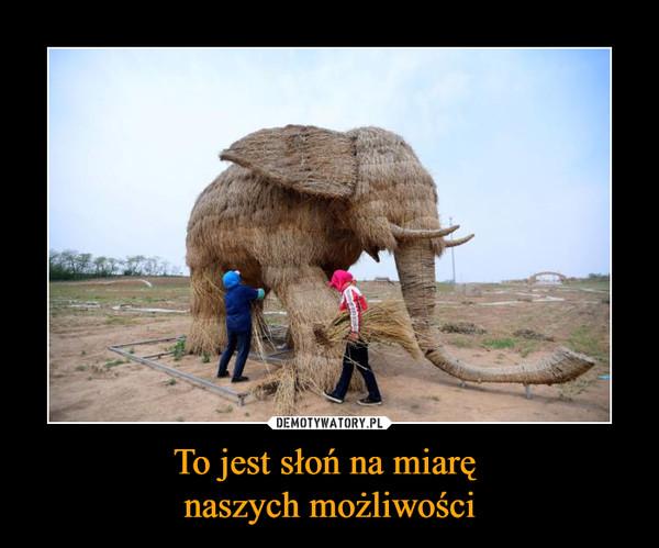 To jest słoń na miarę naszych możliwości –