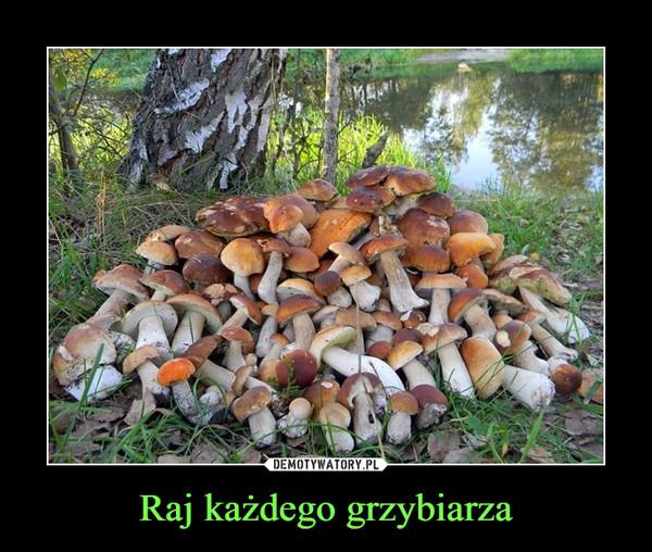 Raj każdego grzybiarza –