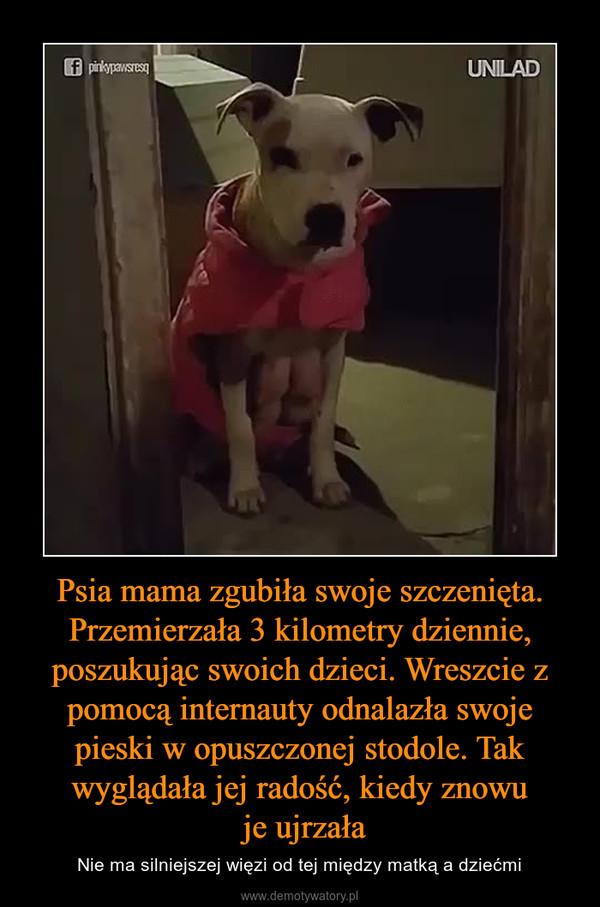 Psia mama zgubiła swoje szczenięta. Przemierzała 3 kilometry dziennie, poszukując swoich dzieci. Wreszcie z pomocą internauty odnalazła swoje pieski w opuszczonej stodole. Tak wyglądała jej radość, kiedy znowu je ujrzała – Nie ma silniejszej więzi od tej między matką a dziećmi