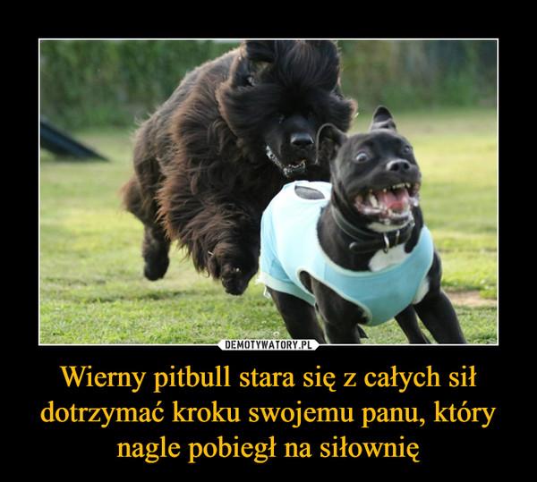 Wierny pitbull stara się z całych sił dotrzymać kroku swojemu panu, który nagle pobiegł na siłownię –