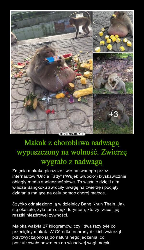 """Makak z chorobliwa nadwagą wypuszczony na wolność. Zwierzę wygrało z nadwagą – Zdjęcia makaka pieszczotliwie nazwanego przez internautów """"Uncle Fatty"""" (""""Wujek Grubcio"""") błyskawicznie obiegły media społecznościowe. To właśnie dzięki nim władze Bangkoku zwróciły uwagę na zwierzę i podjęły działania mające na celu pomoc chorej małpce.Szybko odnaleziono ją w dzielnicy Bang Khun Thain. Jak się okazało, żyła tam dzięki turystom, którzy rzucali jej resztki niezdrowej żywności.Małpka ważyła 27 kilogramów, czyli dwa razy tyle co przeciętny makak. W Ośrodku ochrony dzikich zwierząt przyzwyczajono ją do naturalnego jedzenia, co poskutkowało powrotem do właściwej wagi małpki"""