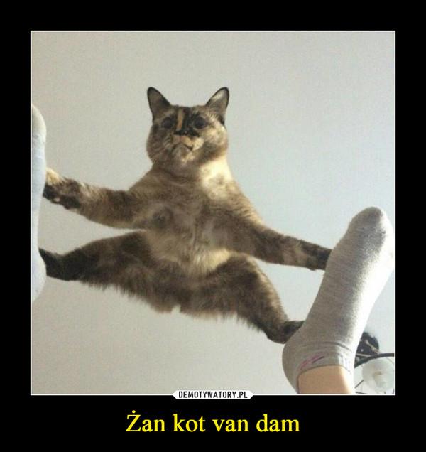 żan Kot Van Dam Demotywatorypl