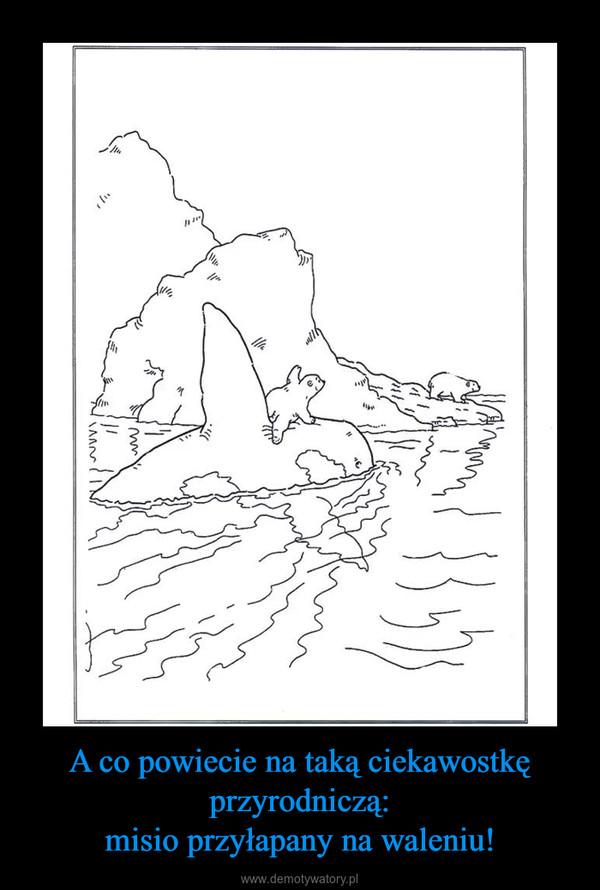 A co powiecie na taką ciekawostkę przyrodniczą:misio przyłapany na waleniu! –