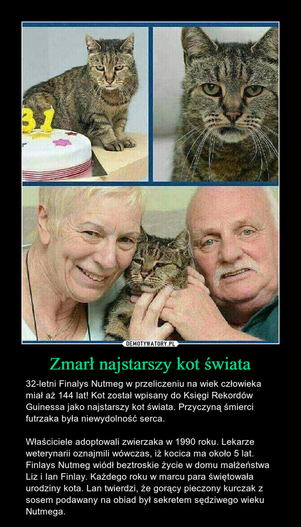 Zmarł najstarszy kot świata – 32-letni Finalys Nutmeg w przeliczeniu na wiek człowieka miał aż 144 lat! Kot został wpisany do Księgi Rekordów Guinessa jako najstarszy kot świata. Przyczyną śmierci futrzaka była niewydolność serca.Właściciele adoptowali zwierzaka w 1990 roku. Lekarze weterynarii oznajmili wówczas, iż kocica ma około 5 lat. Finlays Nutmeg wiódł beztroskie życie w domu małżeństwa  Liz i Ian Finlay. Każdego roku w marcu para świętowała urodziny kota. Lan twierdzi, że gorący pieczony kurczak z sosem podawany na obiad był sekretem sędziwego wieku Nutmega.