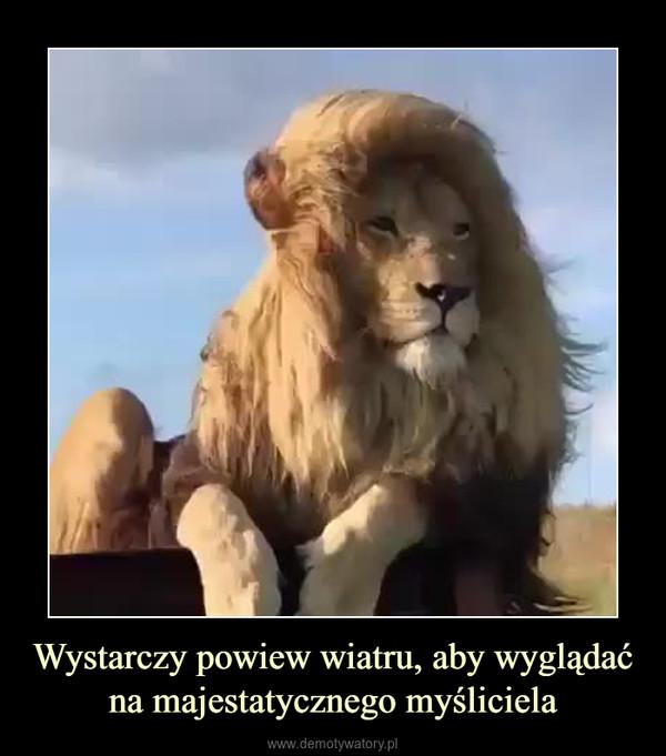 Wystarczy powiew wiatru, aby wyglądać na majestatycznego myśliciela –