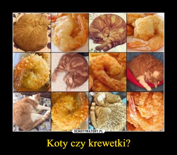 Koty czy krewetki? –